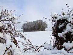 Copse (RAW) (Humber Bridge Boy) Tags: snow hedge copse northferriby alexhay