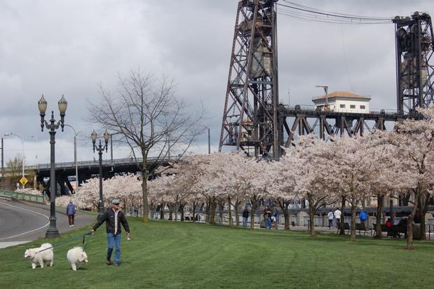 flowers_ctrees_white_dogs_steel_bridge