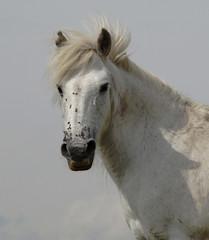 Grey pony portrait (Earthmeridian) Tags: horse white pony sensational picturesque dartmoor galope blueribbonwinner anawesomeshot
