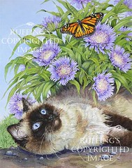 """""""The Monarch and the Queen"""" AER72 by A E Ruffing Ragdoll Cat and Butterfly"""