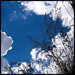 Heavenly (Kirsten M Lentoft) Tags: blue sky white field grass clouds silhouettes onblue mywinners momse2600 betterthangood lightofsummer mmmmmuuahhhhhhhhhhhh kirstenmlentoft