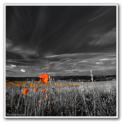 (Richard Roscoe Photography) Tags: artisticexpression abigfave platinumphoto anawesomeshot natureselegantshots