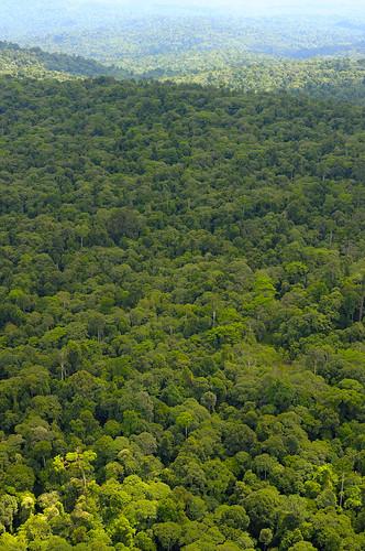 Maliau Basin Forest
