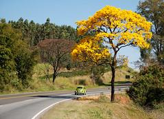 "Nessa longa estrada da ""Vida"" (Jorge L. Gazzano) Tags: ascoresdobrasil"