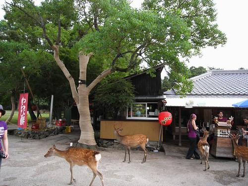 奈良公園の茶店-01