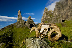 Sheep skull at Old Man of Storr - Isle of Skye - Scotland - UK (Marco Boekestijn) Tags: road old trip morning travel light sunset summer holiday man skye tourism netherlands rock clouds landscape photography skull gold dawn coast scotland early highlands nikon view sheep isleofskye reis delft tourist cliffs marco jurassic oldmanofstorr storr rondreis d80 boekestijn schotlang