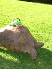 Rod getting a ride on Tommy the tortoise