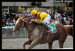 Curlin is the $10 Million Man (Rock and Racehorses) Tags: california horse usa ny newyork classic us track mud belmont champion cigar explore dirt million record northamerica muddy synthetic thoroughbred robby albarado sloppy slop santaanita earnings galope elmont breederscup rockandracehorses horsesatwork curlin 10million jcgc smartstrike