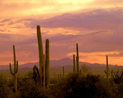 Desert Contrasts (ScenicSW) Tags: sunset arizona cactus sky southwest clouds colorful desert tucson saguaro fabulous picturesque saguaronationalpark sonorandesert cloudscapes smrgsbord desertsouthwest saguaronationalmonument arizonasky arizonasunset desertscape platinumphoto desertsetting impressedbeauty desertcactus desertbeauty desertglow arizonapassages scenicsw flickrsmasterpieces