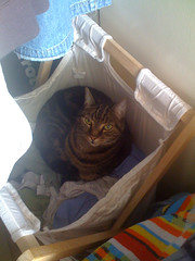 Found Pixel asleep in my laundry hamper!