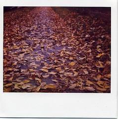 a fall path (julia:elise) Tags: red sun yellow polaroid boots sunny crisp spectra leavesfalling corduroyjacket abeautifulevening beneathmyfeet afallwalk andrustling