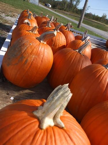 pumpkin stand 005
