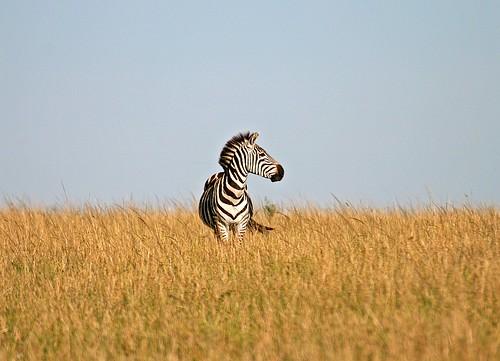 savannah plains