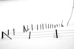 L'herbe du voisin n'est pas toujours plus verte! (8lits) Tags: neige valdetravers barrire anawesomeshot infinestyle bestminimalshot damniwishidtakenthat goldenart novavitanewlife