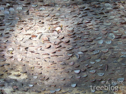 coins in wood