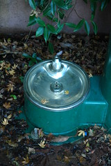 Doggy Bowl (Robert Ogilvie) Tags: foundinsf