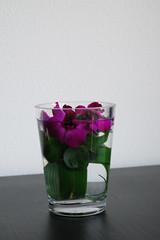 Ikebana 'Three times around' (Otomodachi) Tags: pink flowers stilllife orchid flower ringen ikebana magenta stilleven bamboo rings orchidee bloemen flowerarrangement roze bloem japans bamboe japaneseflowerarrangement bloemschikking schikking spathoglottisunguiculata