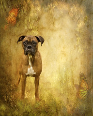 The Magical Forest (dog ma) Tags: dog texture jake canine boxer dogma petportrait 5yearsold nikkor50mm abigfave nikond80 artlibre fawnboxer goldstaraward anythinggoeschallengewinner