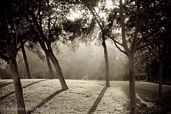Evening myst (Berts @idar) Tags: parque calle zaragoza callejeando efs1855mmf3556 espaa canoneos400ddigital ojosajenos ojosajenoscom