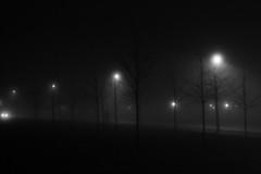 Rendezvous (_CCR) Tags: blackandwhite bw lund fog noir streetlights