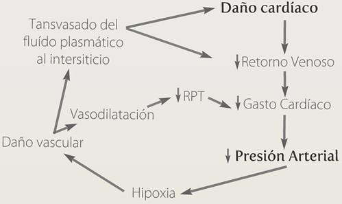 Esquema Shock Cardiogénico, Medicina2.0