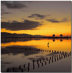 "The Fenny's world (Nespyxel) Tags: seascape nature sunrise reflections landscape alba flamingo dream natura riflessi saline cagliari reflexes fenny quartu fenicottero greatphotographers challengeyouwinner colorphotoaward saariysqualitypictures top25redorangeyellow ""pleasedontusethisimageonwebsites blogsorothermediawithoutmyexplicitpermission©allrightsreserved"" masterclasselite"