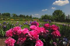 Earth and sky II... (tbower) Tags: flowers ohio landscape geotagged nikon raw nef akronohio stanhywethallgardens nx2 d3s nikkor2470f28 nikongp1