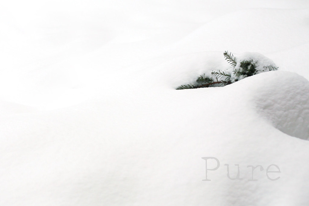 Pure...{60/366}