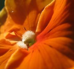 orange point of view
