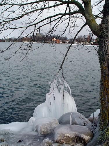 arbre_gelé