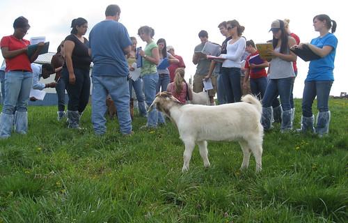 students visit goat farm