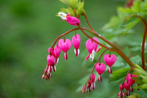 Bleeding Heart Arch