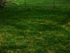 The Green, Green Grass of Home (One Foot Over The Moon) Tags: usa fall wet hail mi spring slick dangerous community unitedstates michigan suburbia american caution northamerica metropolis suburbs 2008 residential slippery precipitation hailstorm downfall sleet detroitarea precipitate metrodetroit frozenrain automobileindustry wolverinestate greatlakesstate greaterdetroit southeasternmichigan