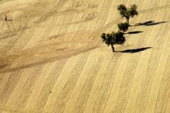 Disegni sulla terra (raffaphoto©) Tags: trees nature landscape marche ancona platinumphoto treesubject megashot theunforgettablepictures picturefantastic goldstaraward