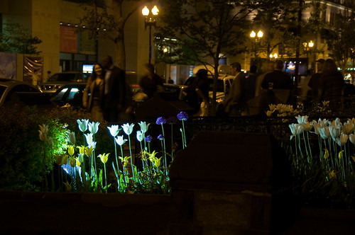 Night flowers, Boylston Street