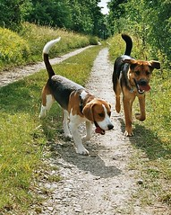 Happy as clams (_Zenji_) Tags: beagle germany jena zen deutscherschaeferhund germanyshepherd