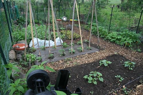 garden in the rain 3