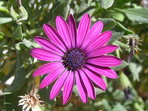 Simetría floral