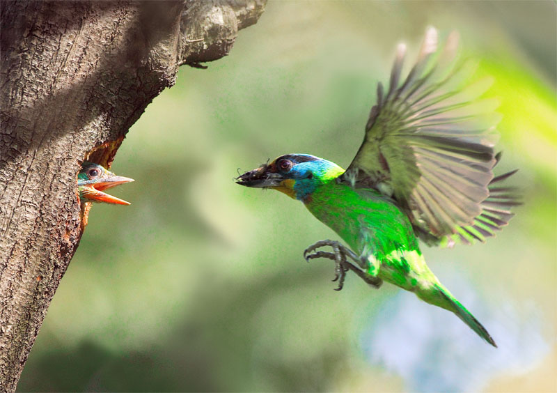 Фотографии маленьких птенцов разных птиц.