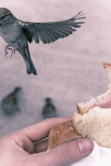 meu sanduiche. (stereomind) Tags: bird picnic palaisroyal stealingsandwich