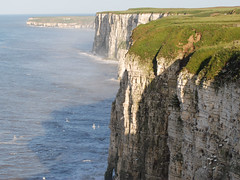Bempton Cliff  Bird  Reserve  East Yorkshire (keithhull) Tags: sea birds reserve cliffs eastyorkshire rspb naturesfinest bempton flickrsbest mywinners abigfave platinumphoto aplusphoto diamondclassphotographer flickrdiamond envyofflickr brillianteyejewel betterthangood theperfectphotographer goldstaraward absolutelystunningscapes britishseascapes saariysqualitypictures