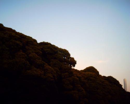【写真】VQ1005で撮影した浜離宮恩賜庭園を取り囲む木々