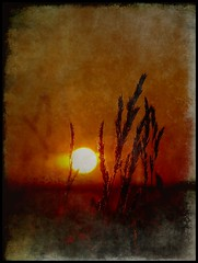 Those were the days (Kirsten M Lentoft) Tags: sunset sun grass weed silhouettes vision themoulinrouge firstquality lifeasiseeit flickrsbest artlibre impressedbeauty momse2600 visiongroup infinestyle goldenphotographer theunforgettablepictures proudshopper thegardenofzen textued multimegashot magicdonkeysbest vision100 oraclex thetempleofaphrodite inthememoriesbook kirstenmlentoft magicunicornverybest