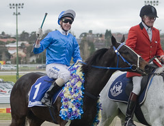 some are bent and brad mclean (Nikkichick88) Tags: horse sports racing steeple horseracing dominant mooneevalley jumpsracing somearebent hissomearebent hiskenssteeple racingvictoria