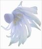 Flower Macro / Lotus Macro - IMGP3834 Flower Macro /