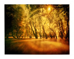Protuberencia (jonespointfilm) Tags: longexposure blur photoshop mediumformat polaroid soft hungary scanner blurvision creative lofi pinhole homemade filter shutter instant softfocus epson expired lensless lightmeter cameraobscura lenox dreamcatcher pinholephotography manfrotto unsharp slowshutterspeed lochkamera lowfi magyarorszg 3x4 tiffen packfilm longtimeexposure longtime velbon alternativephotography lowfidelity peelapart pinholephoto silverfast creativephotography polaroidphoto polaroidphotography withoutlens cameramaker opticalfilter pinholepicture homemadepinhole lyukkamera polaroidpinhole autaut lenslessphotography opticalphilter pinholeimage peelapartfilm lenoxlaser camerabuilder exposurechart mattebox epsonperfection3200photo minoltalightmeter silverfastse exposureconpensation
