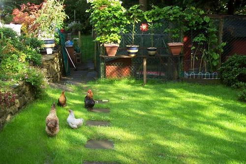 chicken garden by DrSlippers2007