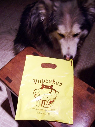 nuki and bag of treats