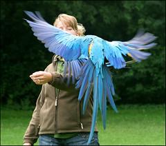 Simultaanlanding (Emil de Jong - Kijklens) Tags: bird birds zoo aqua vogels ara vogel leeuwarden