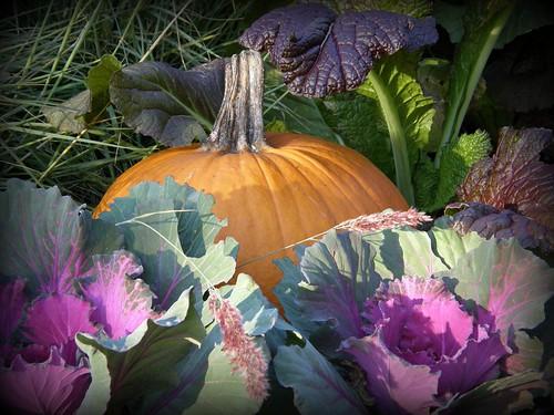 cottage garden pumpkin